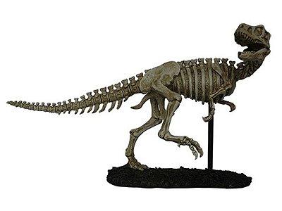 Esqueleto de Dinossauro (T-Rex) 47cm
