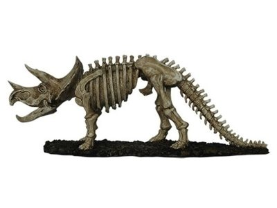 Esqueleto de Dinossauro (Triceratops) em Resina 16x42x11cm