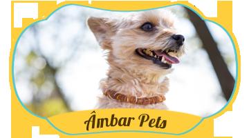 coleiras lithu Âmbar Pets