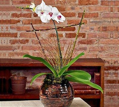 Orquídea phalaenopsis semi alba em base de vidro
