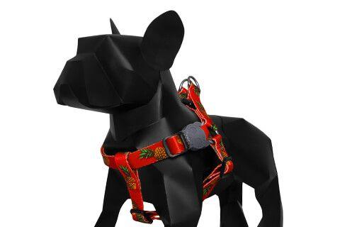 Zeedog Peitoral para Cachorros Tropicalia G