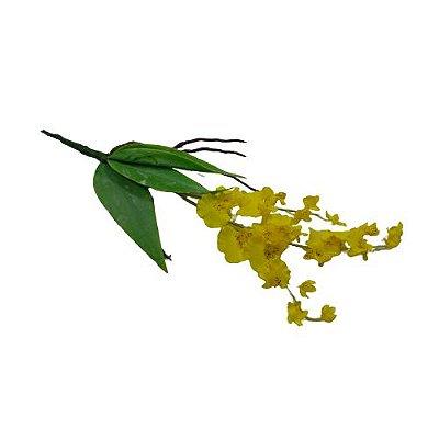 Mini Chuva de Ouro, Folhas com Raiz - O Pacote com 3 unidades - Cód.: 54