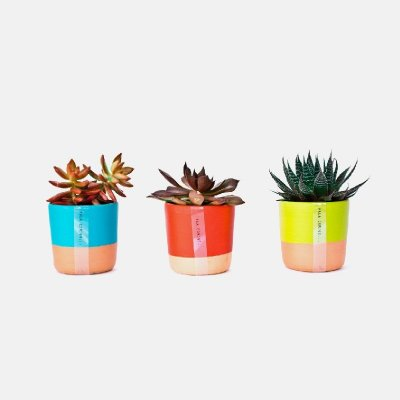 Mini Vasos - TRIO suculentas