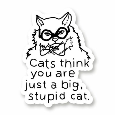 Stupid Cat - Adesivo de Vinil