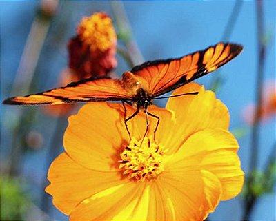 Borboletário: Conhecendo as borboletas