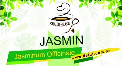 Jasmin - Jasminum Officinale - 250 Grs - Cha do Brasil