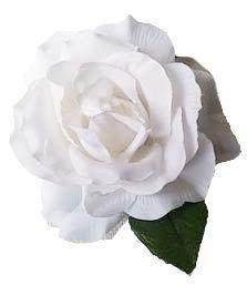 Rosa 11 cm