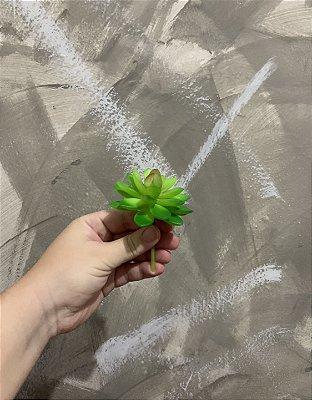 Mini Suculenta