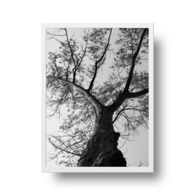 Quadro Fotografia Árvore p&b