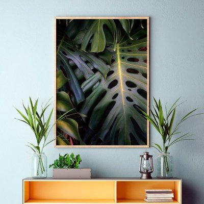 Quadro Poster Decorativo Foto Planta Viva Costela de Adão - Natureza, Tropical