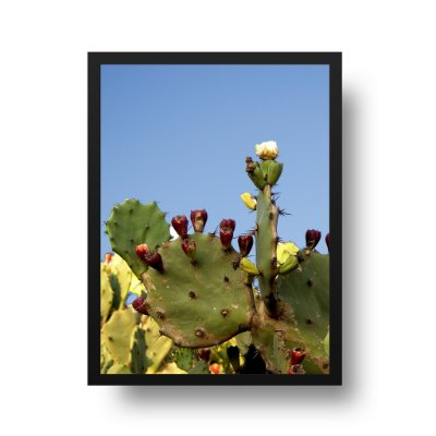 Quadro Poster Decorativo Foto Cactus Vivo Céu Azul - Praia Itacoatiara