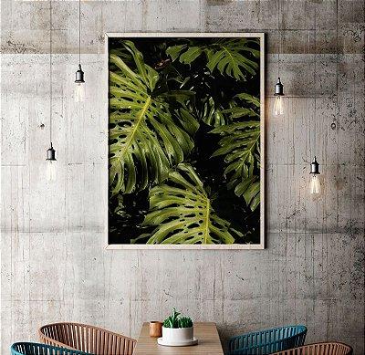 Quadro Decorativo Poster Foto Folhas Costela de Adão - Planta, Folhagem, Verde
