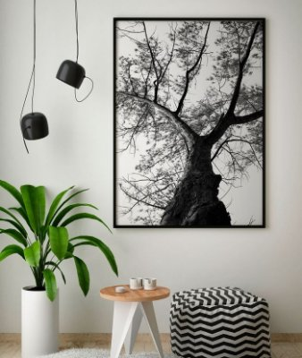 Quadro Decorativo Poster Foto Preto e Branco Árvore Casuarina