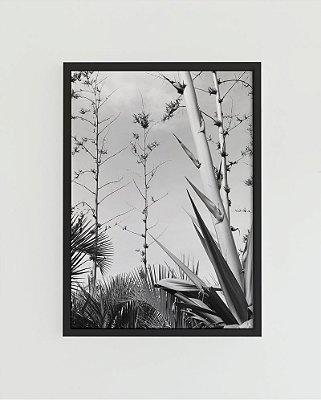 Quadro Decorativo Poster Fotografia Agaves - Natureza, Planta, Preto e Branco
