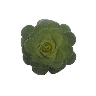 Flor Suculenta Rosa Verde