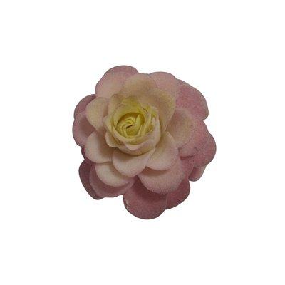 Flor Suculenta Rosa