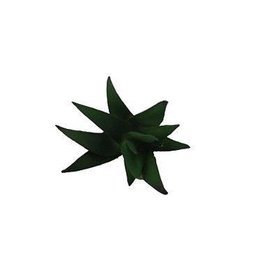 Suculenta Verde
