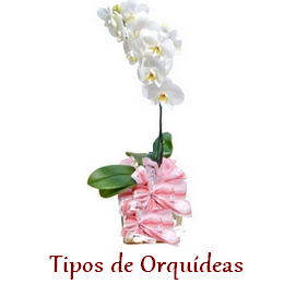 Banner-orquídea