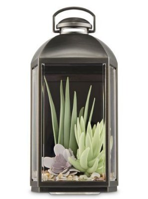Images Succulent Lantern Wallflowers Fragrance Plug