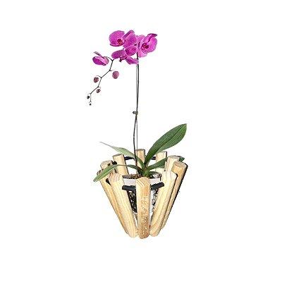 Vaso Jardinagem Cachepot Orquídeas Semente Flores