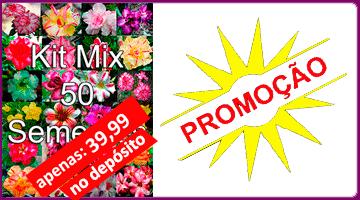 KIT MIX 50 sementes de Rosa do Deserto 39_99