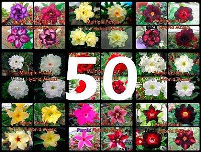 "Kit 50 Sementes de Rosa do Deserto ""MULTI PETALAS MIX"""