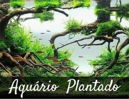 banner plantado