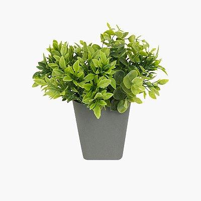 Vaso com Plantas Parede Cinza