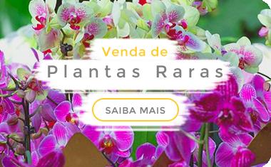 Plantas Raras