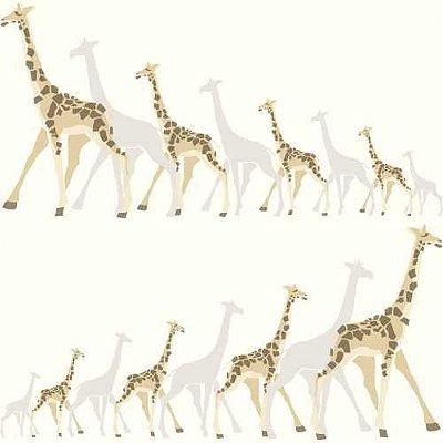 Papel de Parede Dwell Studio Baby Kids DW2362 Girafas