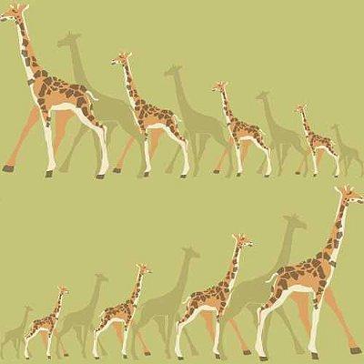 Papel de Parede Dwell Studio Baby Kids DW2364 Girafas