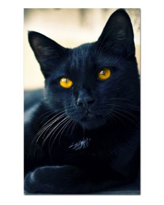 Ímã Decorativo Gato Bombaim - Pet Cat - IGAT05
