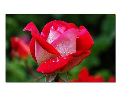 Ímã Decorativo Rosas - Garden - IFL10