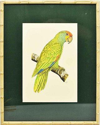 Quadro de Pássaro 2 com Passpatour verde e faux bamboo