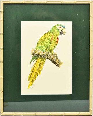 Quadro de Pássaro 9 com Passpatour verde e faux bamboo