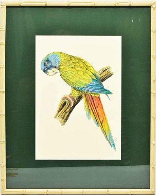 Quadro de Pássaro 10 com Passpatour verde e faux bamboo