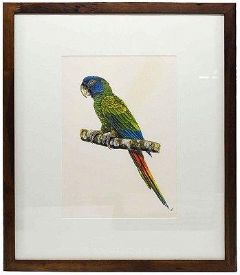 Quadro de Pássaro 4