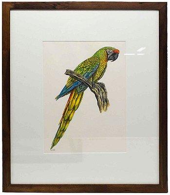 Quadro de Pássaro 5