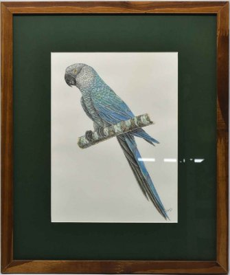 Quadro de Pássaro passpatour verde