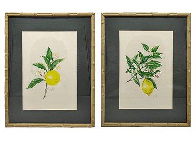 Dupla de quadros limão siciliano