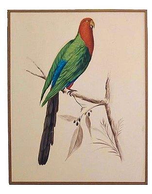 Quadro pintura a óleo pássaro cabeça vermelha