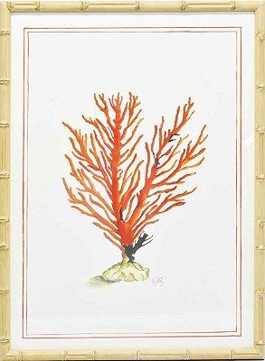 Gravura coral moldura faux bamboo 3