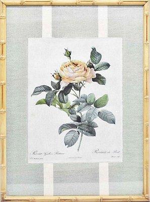 Quadro gravura de rosas com moldura de faux bamboo fundo listra 4