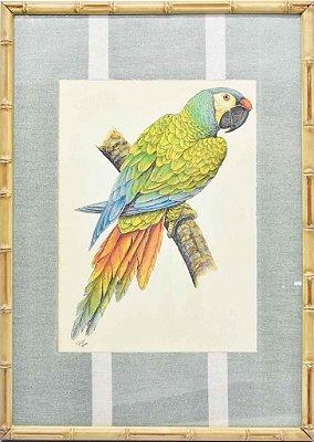Quadro gravura pássaro com moldura de faux bamboo fundo listra 11