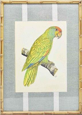 Quadro gravura pássaro com moldura de faux bamboo fundo listra 12