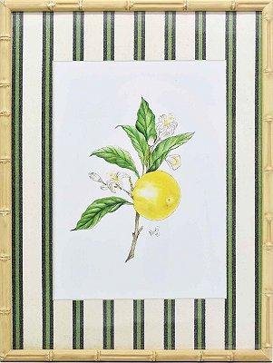 Quadro Limão Siciliano 6 Zanatta Casa