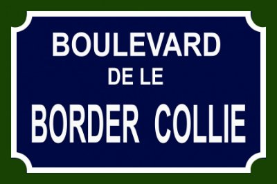 Placa Boulevard Border Collie