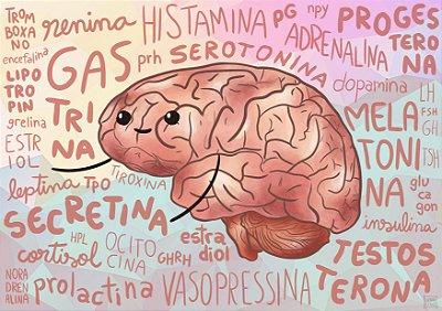O Cérebro e Seus Hormônios