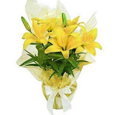 Lírio Amarelo - Amanhecer