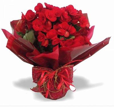 Begônia Vermelha - Toque de Amor